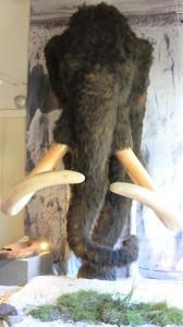 Mammut im Eiszeitmuseum