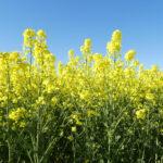 Böden und Pflanzen, Felder und Wiesen im Nienthal